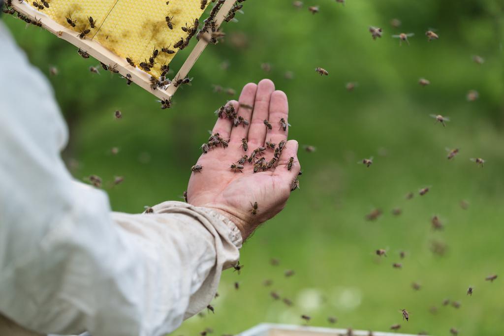 ミツバチに刺されたら